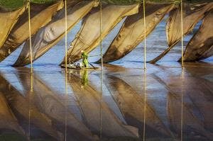 SPC Merit Award - Dingfeng Zheng (China)  Fishing Family2