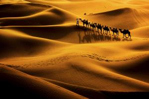 SPC Merit Award - Jing Gu (China)  Camel Shadow