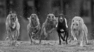 IUP Bronze Medal - Jozef De Fraine (Belgium)  Start Honden
