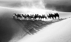 SPC Merit Award - Phillip Kwan (Canada)  Camels Up The Sand Bw