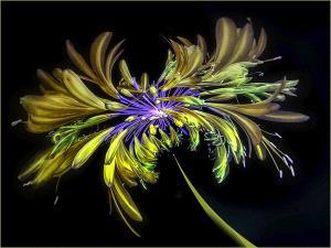 IUP Honor Mention - Michelle Stokie (Australia)  Fun Flower No 3