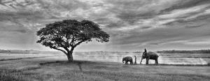 PhotoVivo Gold Medal - Lee Eng Tan (Singapore)  Elephants And Lone Tree