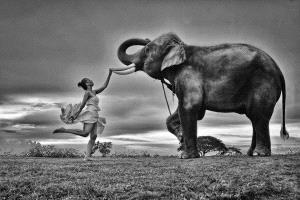 SPC Merit Award - Lee Eng Tan (Singapore)  Lady With Elephant