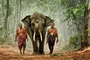 IUP Silver Medal - Lee Eng Tan (Singapore) <br /> The Mahout Walk