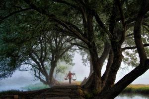 SPC Bronze Medal - Sze-Wah Chee (Singapore) <br /> Trees Frame Farmer