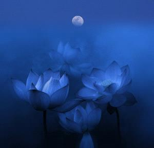 SPC Bronze Medal - Jinsheng Nie (China)  The Lotus Pool By Moonlight
