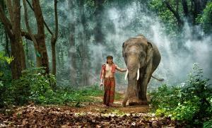 SPC Merit Award - Twee-Liang Wong (Singapore) <br /> Surin Mahout Walking Elephant