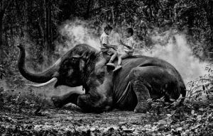 PhotoVivo Silver Medal - Twee-Liang Wong (Singapore)  Surin Kids On Elephant Bw