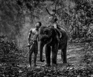 Local Best - Twee-Liang Wong (Singapore)  Surin Young Mahout Bw