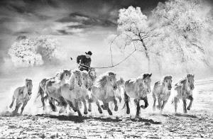 SPC Gold Medal - Arnaldo Paulo Che (Hong Kong)  Horse Looping