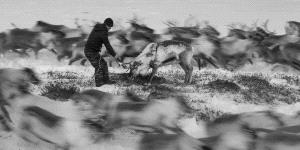 IUP Honor Mention - Sergey Anisimov (Russian Federation)  Catch Reindeer 10