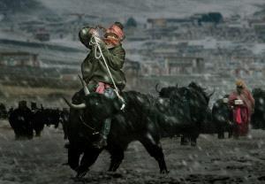 SPC Bronze Medal - Xin Yan (China)  Kangba Man
