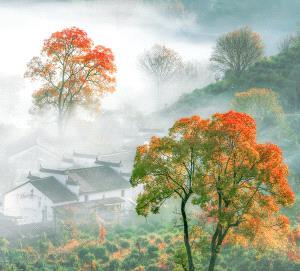 SPC Merit Award - Qian Lou (China) <br /> In The Morning Mist