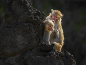 SPC Silver Medal - Yi Wan (China)  Monkey 78