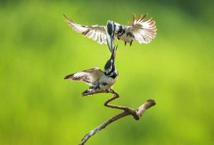 PhotoVivo Honor Mention - Yong Xu (China)  Air Relay