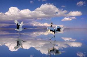 IUP Honor Mention - Hong Cui (China) <br /> Crane Dancing