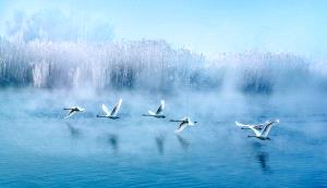 SPC Merit Award - Ruixiang Jiang (China) <br /> Charming Flying