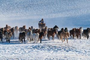 SPC Merit Award - Ming Li (China) <br /> Horses In Snow Land 2