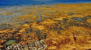 SPC Gold Medal - Bing Lu (China)  Seaweed