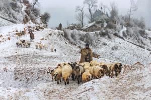 SPC Merit Award - Xiequn Li (China)  The First Snow Morning