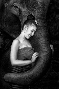 IUP Gold Medal - Foo Say Boon (Malaysia) <br /> Lady Love Elephant