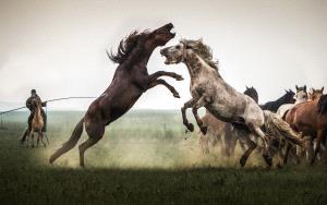 PhotoVivo Honor Mention - Changhai Wu (China)  Roar