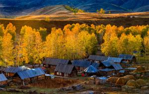 IUP Honor Mention - Ying Xie (China)  Baihaba Autumn
