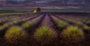 PhotoVivo Honor Mention - Yury Pustovoy (Russian Federation) <br /> Provence