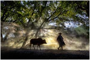 PhotoVivo Honor Mention - Thomas Lang (USA) <br /> Morning Song