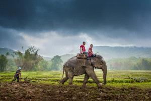 SPC Silver Medal - Sukrit Hirunsaraphong (Thailand) <br /> Elephant Plow