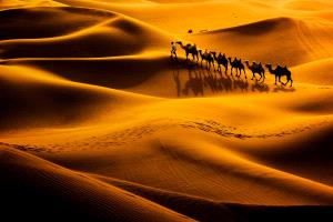 PhotoVivo Gold Medal - Jing Gu (China) <br /> Camel Shadow