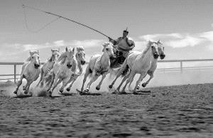 SPC Merit Award e-certificate - Xiping An (China)  Shepherd And Seven Horses 1