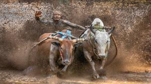 ICPE Gold Medal - Tat Seng Ong (Malaysia) <br /> Bullrace 1