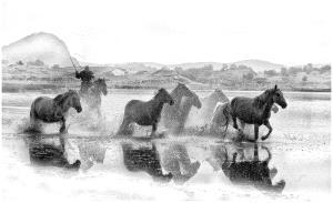 APAS Honor Mention e-certificate - Thomas Lang (USA)  Splashing Horses