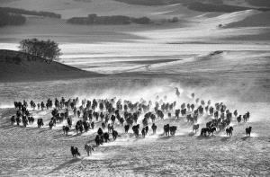 SPC Merit Award e-certificate - Wei Wang (China)  Ten Thousand Steeds Gallop
