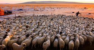 SPC Merit Award e-certificate - Mingyou Zhang (China)  Song Of Herding Sheep