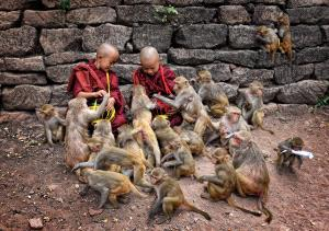 SPC Merit Award e-certificate - Pui-Chung Yee (Singapore) <br /> Monwya Monks With Monkeys